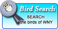 button link to my bird search