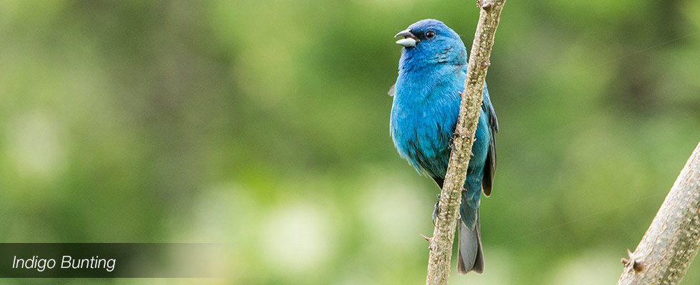 My birding blog site